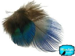 moonlight feathers buy moonlight feather peacock feathers iridescent blue and