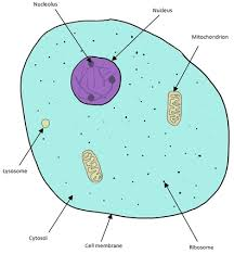 chapter 6 cell structure leavingcertbiology net