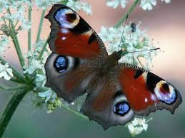 what does the butterfly do for nature hunker