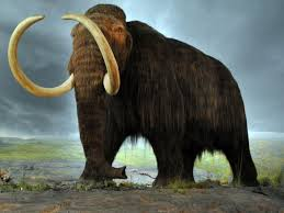 25 wooly mammoth clone ideas mammoth