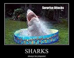 Be Prepared Meme - it s monday you could use some motivation 26 photos shark