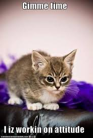 Cute Funny Cat Memes - 20 cute cat memes that will put you in a good mood sayingimages com