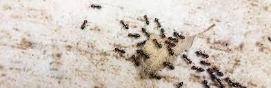 roaches edmonton crawling pest control capital city exterminators