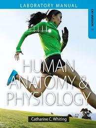 human anatomy physiology lab manual cat ver pdf human body lip