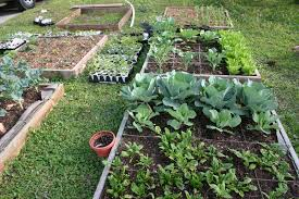 Squar Foot Homestead Life How To Build A Square Foot Garden