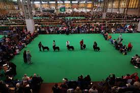 boxer dog crufts 2014 crufts dog show owner claims dog poisoned time com