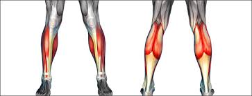 High Ankle Sprain Anatomy Shin U0026 Calf Pain