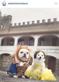 Cute Small Dog Halloween Costumes U0027s Scary 10 Cute Halloween Dogs Costume