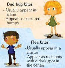 Difference Between Bed Bug Bites And Mosquito Bites Flea Bites Vs Bed Bug Bites Bed Bugs Bites Bug Bite And Dog Care
