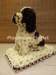 dog flower arrangement 3d springer spaniel dog made in flowers for a funeral plantwise