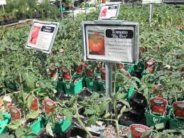 plant a summer vegetable garden edgewater md patch