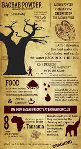 this infographic is about baobab powder africa s superfood the