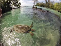 Hawaii travel blogs images Family travel blog how to find sea turtles on the big island of JPG