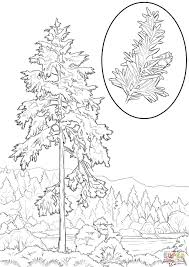 western hemlock coloring page free printable coloring pages