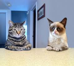 Meme Generator Two Pictures - two grumpy cats blank template imgflip