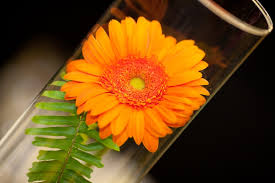 gerbera daisy wedding centerpiece