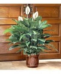 Best Fragrant Indoor Plants - what are the best indoor flowering plants quora