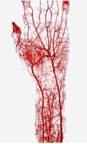 492 best blood sweat u0026 tears images on pinterest phlebotomy
