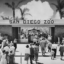 op 15746 3181 entrance san diego zoo c1960 540 san diego history