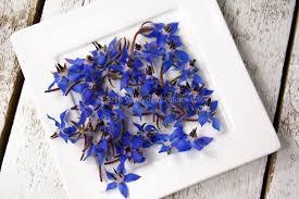 edible blue flowers eetbare bloemen vugt kruiden