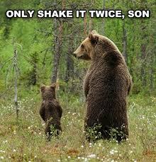 Funny Bear Memes - the daily scramble vol 261 31 pics getsokt com