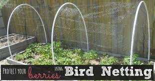 gardening bird netting for berry bushes