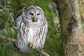 how to keep birds away from patio learn to identify five owls by their calls audubon