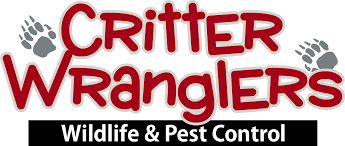 house centipede control getting rid of centipedes critter