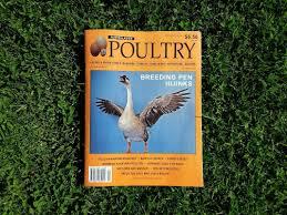 Backyard Chickens Magazine Adelaide Chicken Sitting Service Blog