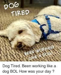 Tired Dog Meme - 25 best memes about working like a dog working like a dog memes
