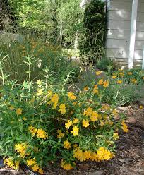 california native plant garden planting for pollinators the real dirt blog anr blogs