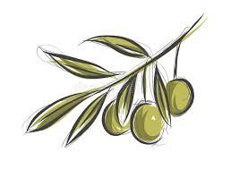 olive tree branch stock vector illustration of branche 46766068