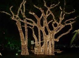 how to hang lights on outdoor trees rainforest islands