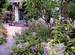 oaktown native plant nursery pacific horticulture society a garden of small miracles