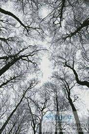 looking up at winter trees cross stitch pattern silhouettes
