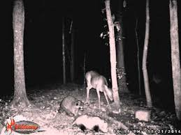 wildgame innovations lights out wildgame innovations x7 youtube