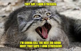 Stressed Out Memes - pallas s cat imgflip