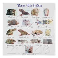 betta fish tank setup ideas statement rats pet