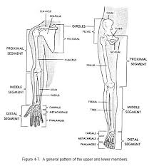 Study Guide Anatomy And Physiology 1 Best 25 Anatomy And Physiology Courses Ideas On Pinterest Human