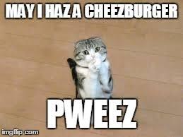 Cheezburger Meme Builder - begging cat memes imgflip