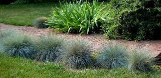 how to grow ornamental grasses in your yard today s homeowner