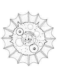 shell coloring pages drawing for kids reading u0026 learning