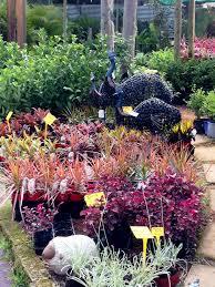 native plants nursery perth new leaf nursery sustainable plants and children u0027s petting zoo