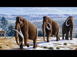 scientists bring 22 animals extinction