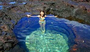 lanai pictures maui lanai dolphins maui adventure cruises