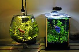 Betta Fish Vase With Bamboo Betta Fish Tank Setup Ideas That Make A Statement Spiffy Pet