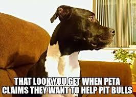 dear peta dogs respond to peta joining terrible anti pit bull