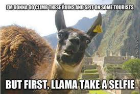 Llama Meme - llama take a selfie by aninnocentcivilian meme center