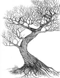 tree drawing picture 1000 images about how to draw realistic trees