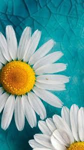 imagenes lindas naturaleza lindas flores naturaleza backgrounds pinterest naturaleza